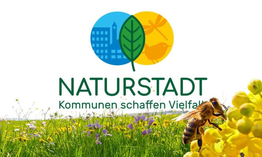 Umwelt Grafikdesign Naturstadt